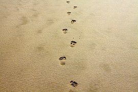 footprint-1021452__180